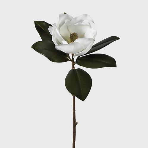 White magnolia  stem