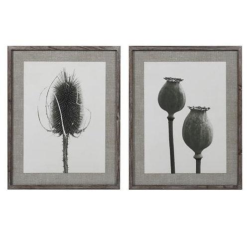 Poppy teasel framed print