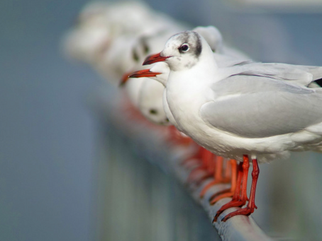 Auftritt der Vogelwarte