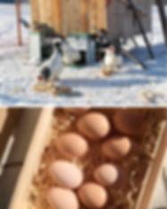Eier.jpg