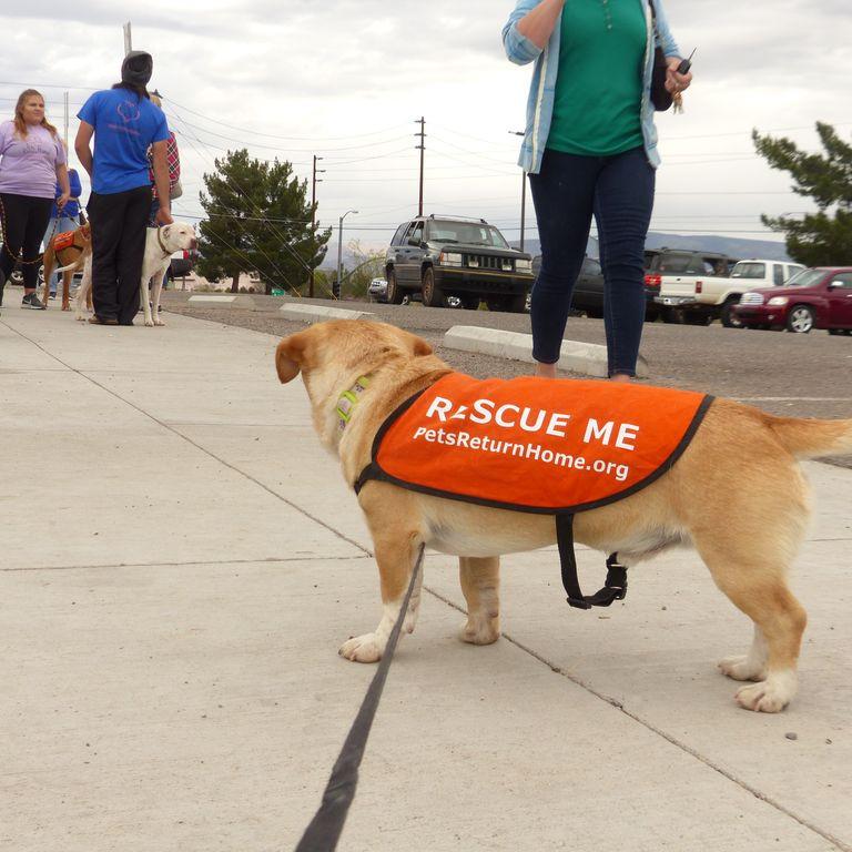 Adoption Event Volunteering - Petsense - Cottonwood, AZ 8:30AM-2:00PM