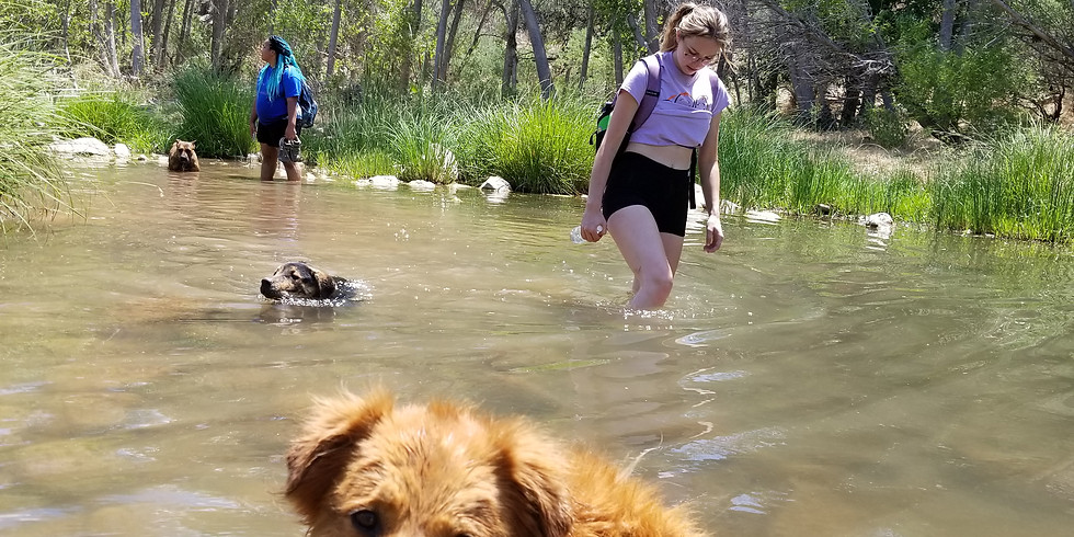 Hike the Dogs 7:00 AM – 1:00 PM