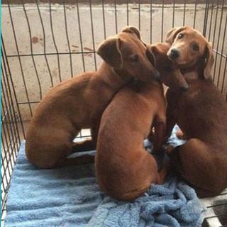 Wiener Dogs.JPG