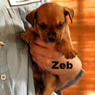 Zeb Profile 01.png