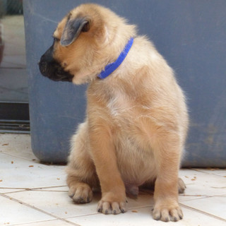 Puppy Blue (4).JPG