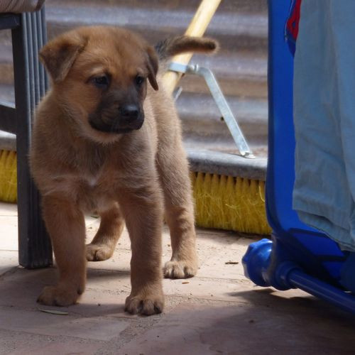 Puppy Blue (7).JPG