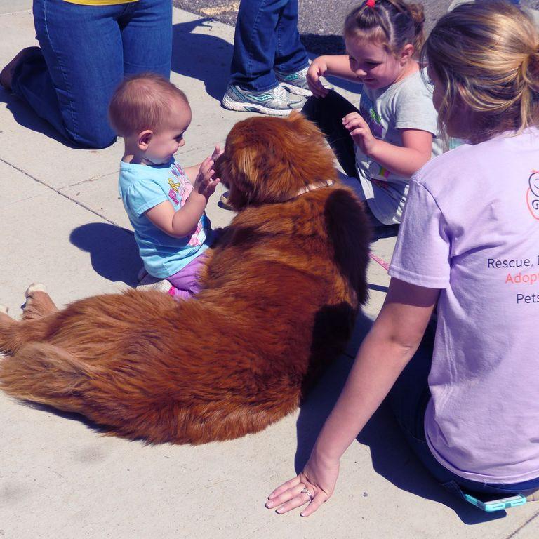 Adoption Event Volunteering - Tractor Supply - Cottonwood, AZ 8:30AM-2:00PM (1)