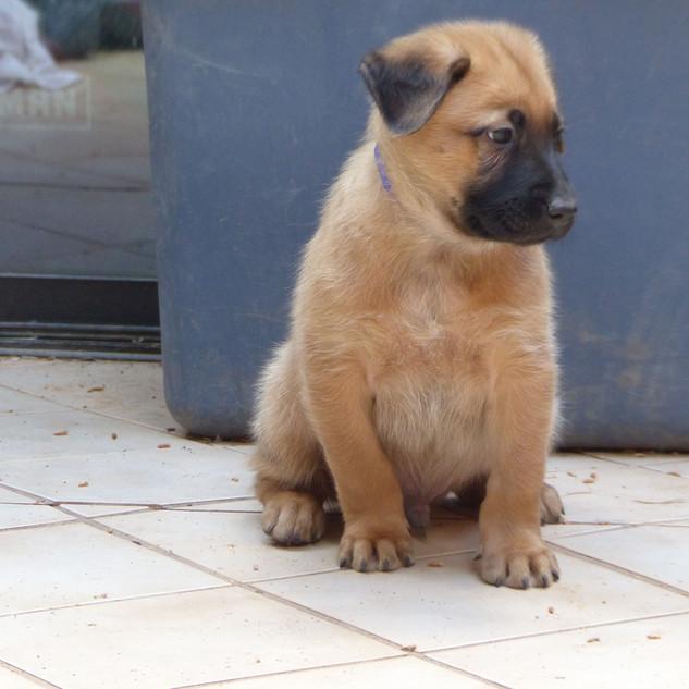 Puppy Blue (3).JPG