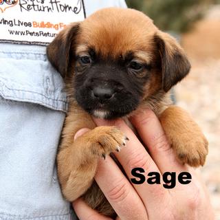 Sage Profile 01.png