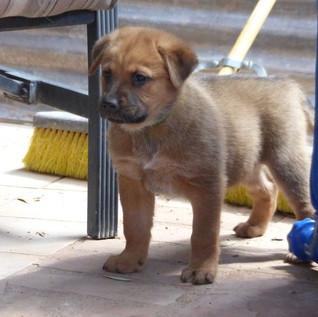 Puppy Blue (6).JPG