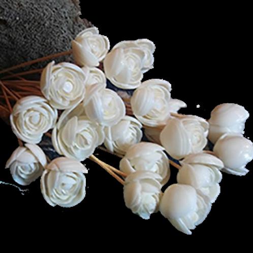 Dozen - Seashell Roses