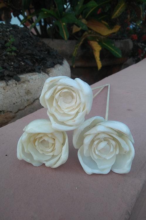 3 for $25 - Seashell Roses