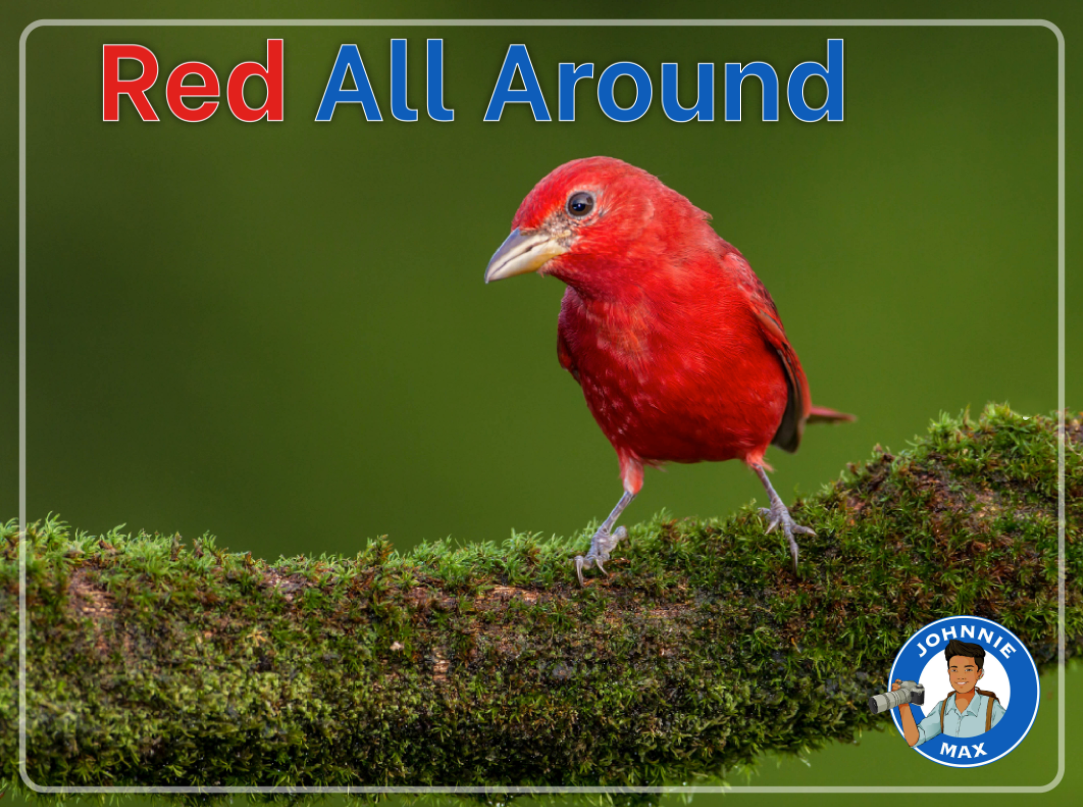 Red All Around eBook