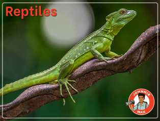 Reptiles eBook