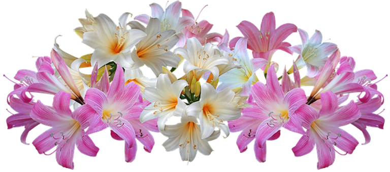 lilies-4025156_640.png