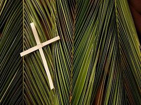 Palm Branches 1.jpg