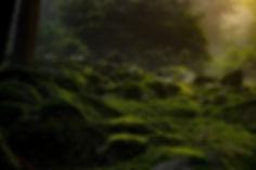 forest-2137574.jpg