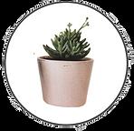 vetplant cirkel 4.png