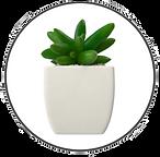 vetplant cirkel 1.png