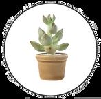 vetplant cirkel 3.png