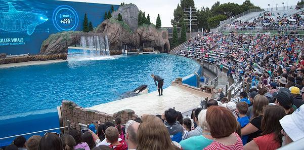 whales, orca, black fish, blackfish, aquarium, sea world, theater, show, san diego