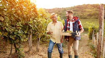 Family in vineyard celebrating harvestin