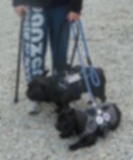 chien d'assistance, formation de chiens d'assistance, fcapi44