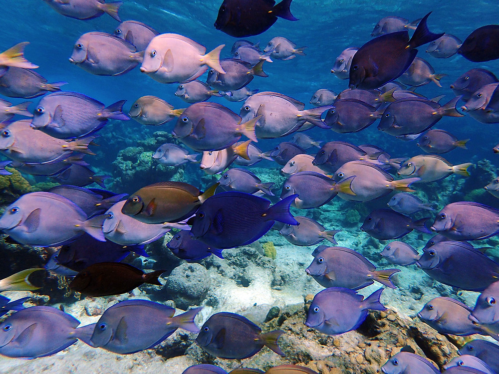 colorful fish St. Thomas