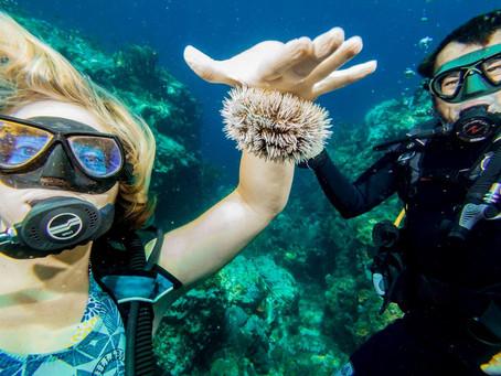 Great diving!