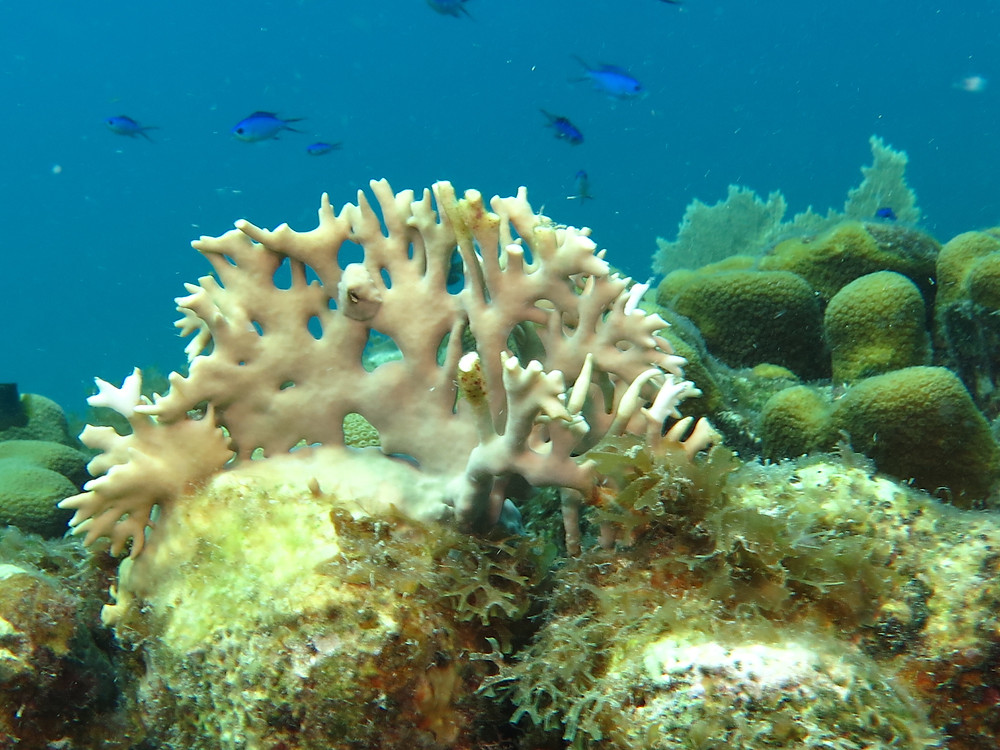 Coral Diving St. Thomas Virgin Islands