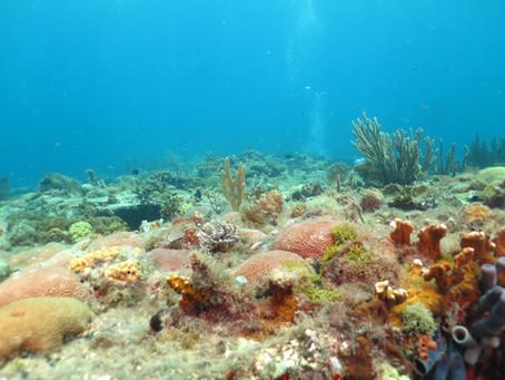 Great People & Wonderful Diving