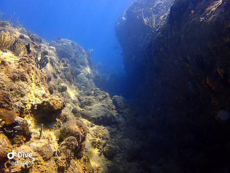 Amazing diving trip!