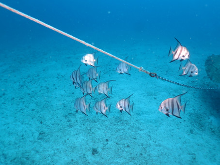 St Thomas Underwater