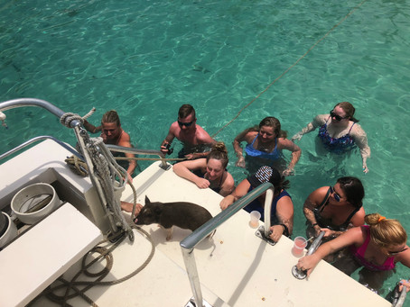 Diving in St. Thomas with Abbi the Scuba Pig