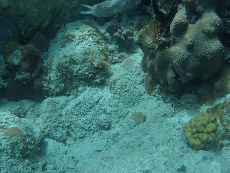 Excellent small dives groups close to cruise port & offer pickup service