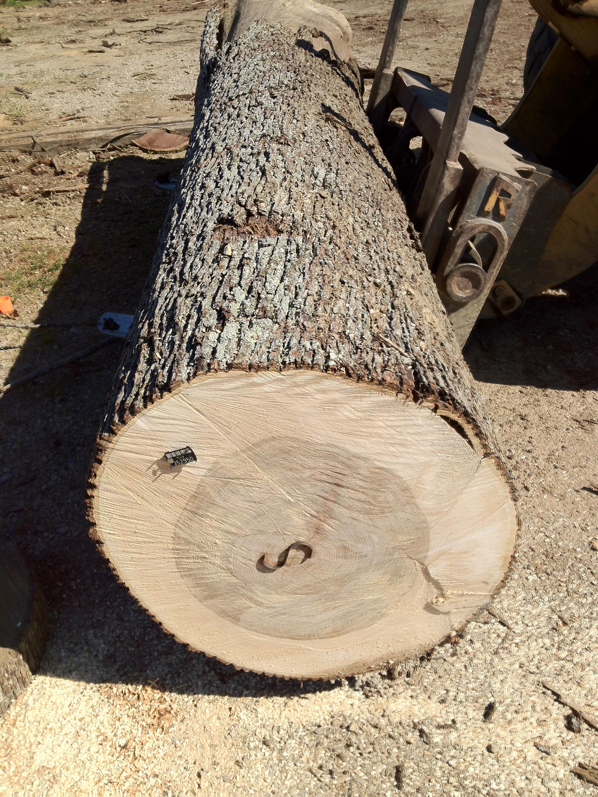 Hickory Veneer Logs