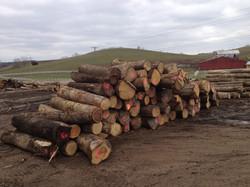 Premium Veneer Logs
