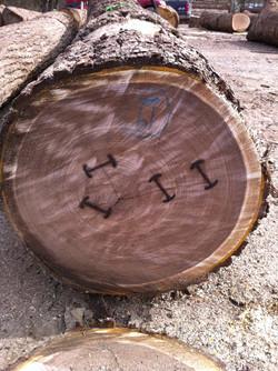 Walnut Veneer Logs