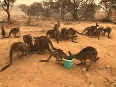 Bosbranden Australië (17).jpg