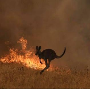 Bosbranden_Australië_(7).jpg