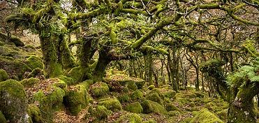 Praten met bomen  (3).jpg