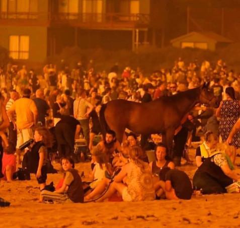 Bosbranden_Australië_(6).jpg