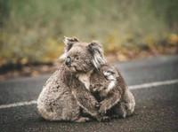 Bosbranden_Australië_(9).jpg