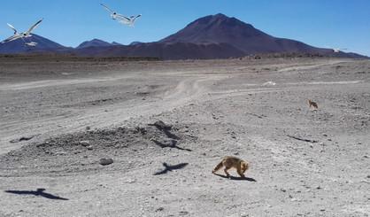 Reserva Nacional de Fauna Andina Eduardo