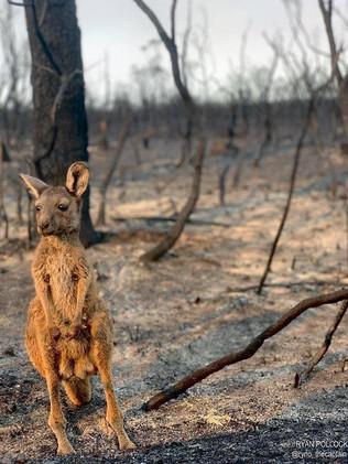 Bosbranden_Australië_(2).jpg