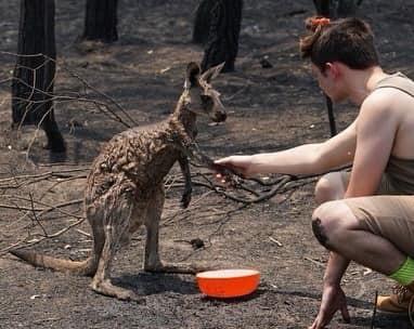 Bosbranden Australië (14).jpg