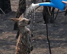 Bosbranden Australië (18).jpg