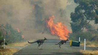 Bosbranden Australië (22).jpg