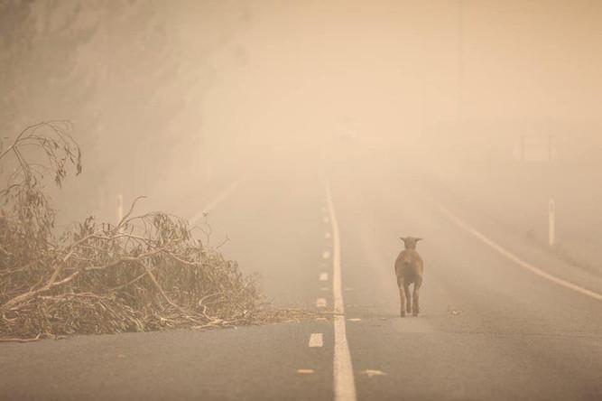 Bosbranden_Australië_(5).jpg