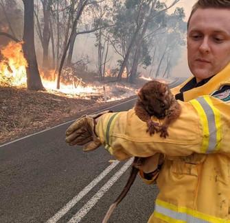 Bosbranden Australië (19).jpg